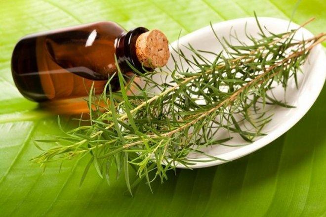 Прыщи и масло чайного дерева
