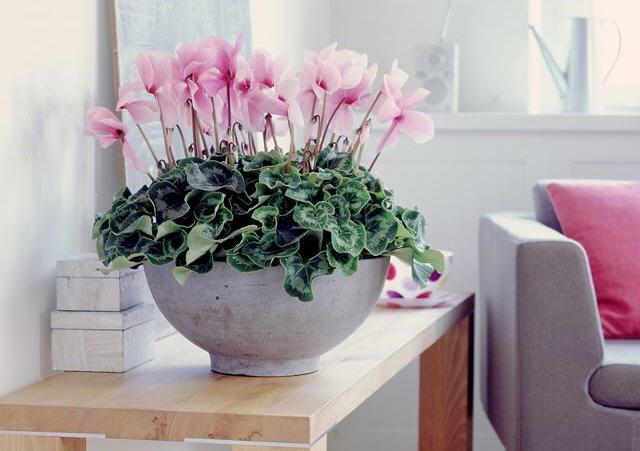 Комнатные цветы, для благополучия в доме