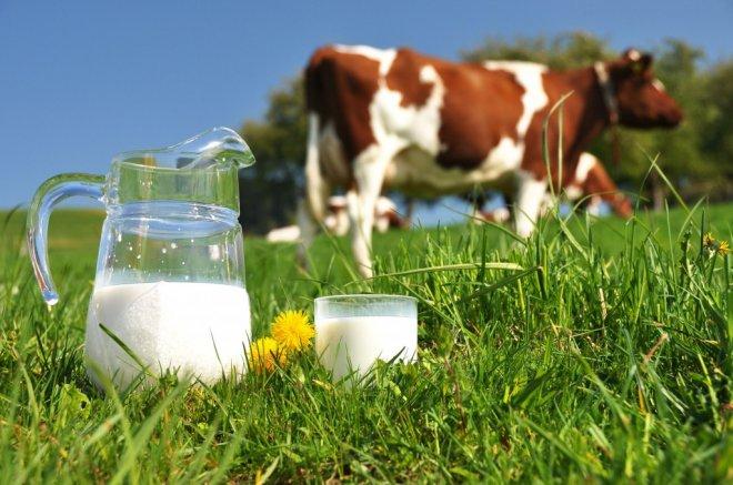 Почему горчит коровье молоко и можно ли его пить