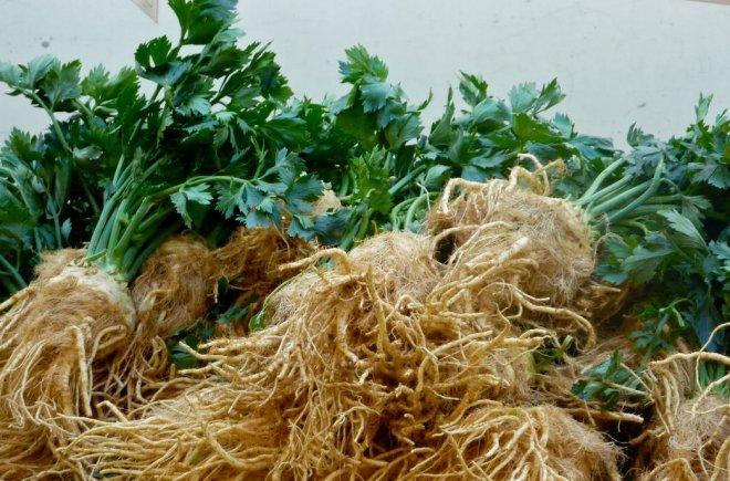 Как сохранить сельдерей корневой на зиму