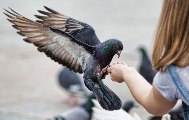 Примета - птица накакала на голову