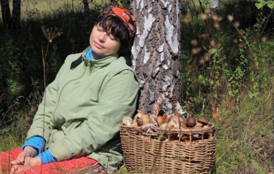 К чему снятся грибы женщине: собирать грибы, готовить грибы, есть грибы