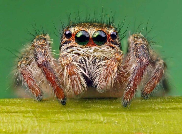 Если в доме появились пауки, к чему это