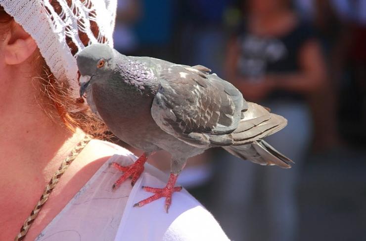Примета: птица накакала на плечо