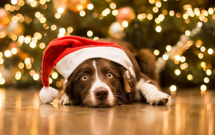 Что должно быть на столе в Новый год Собаки 2018