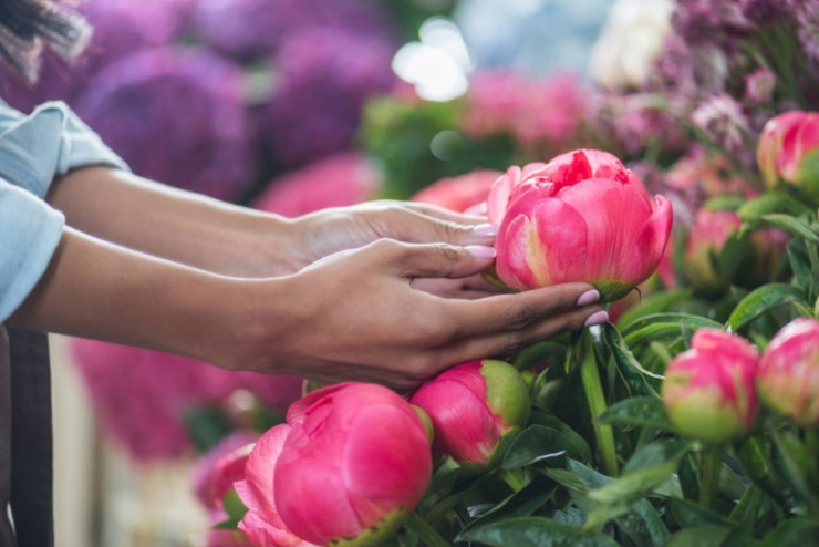 Неприхотливые и красивые растения для сада