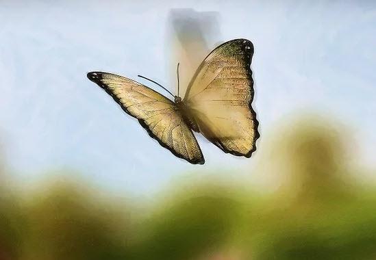 бабочка летает