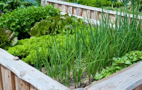 Разновидности огородного лука