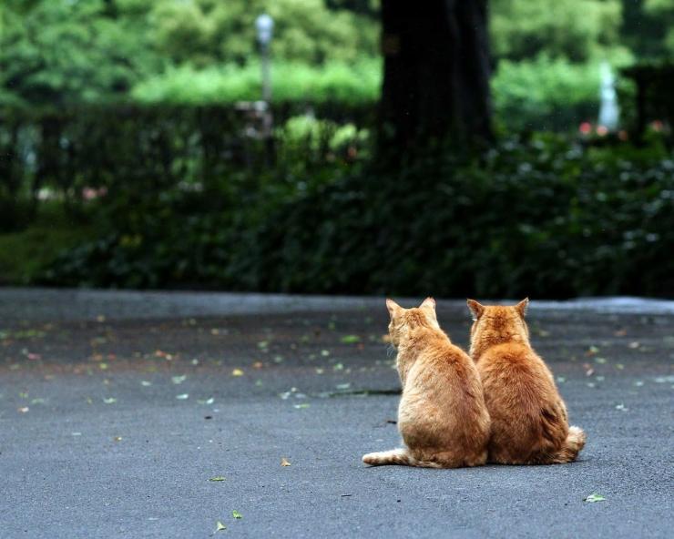 Что означает когда рыжий кот перешел дорогу