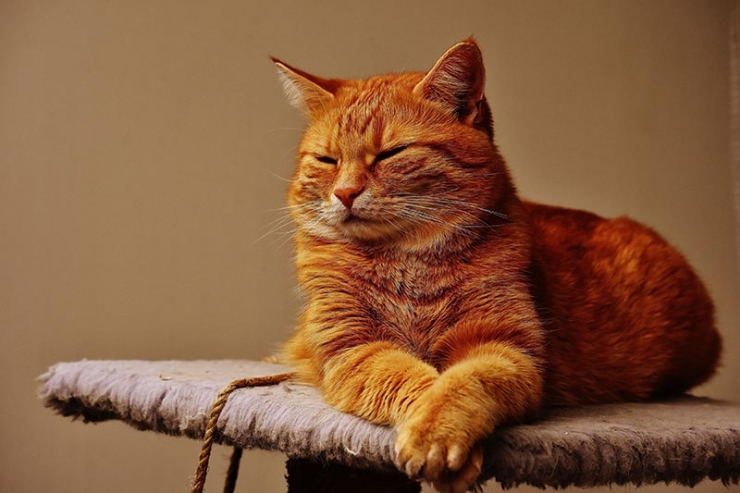 рыжий кот в доме