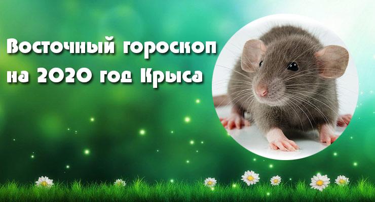 Общий гороскоп на 2020 год для Крысы
