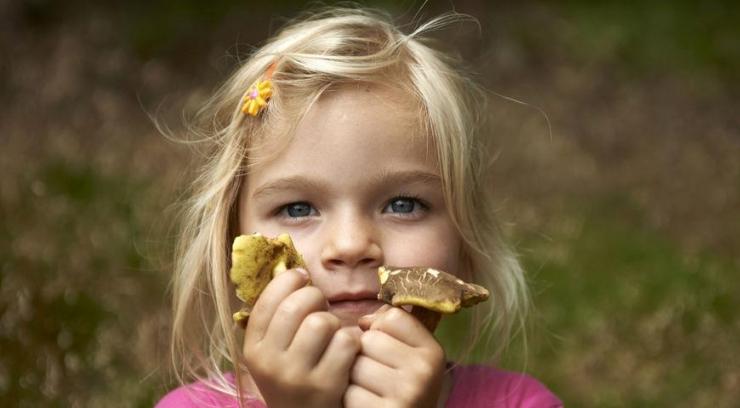 Какие грибы и в каком возрасте давать малышам
