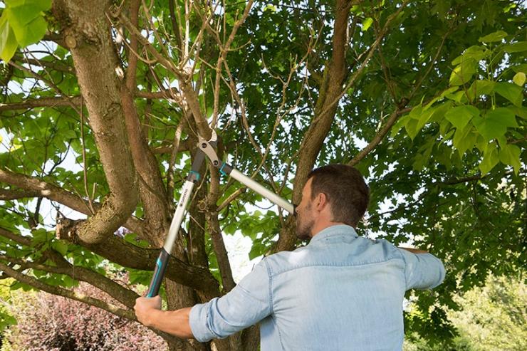 Обрезка деревьев весной для начинающих