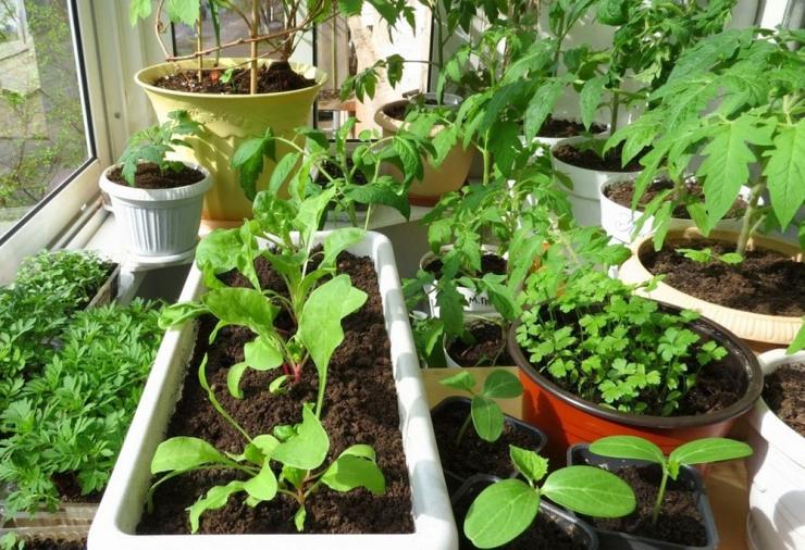 Жить вкусно: выращиваем фрукты и овощи в домашних условиях