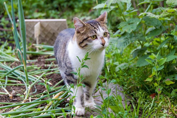 Как отвадить кошек вредить в огороде