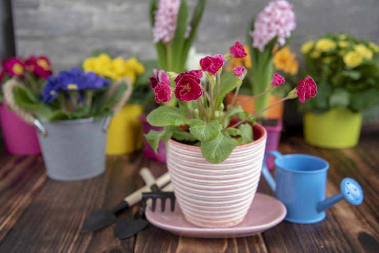 Как решить проблемы с цветением комнатных растений