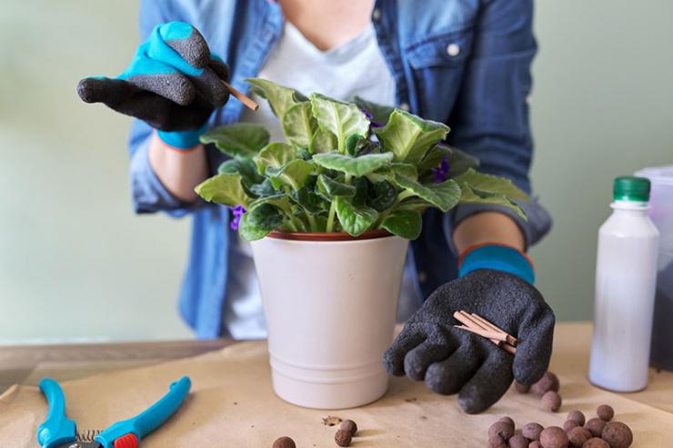 как решить проблему цветения комнатных растений