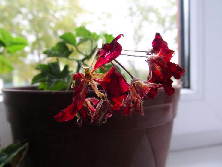 увядание цветков